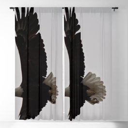 Wingspan Blackout Curtain