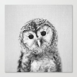 Baby Owl - Black & White Canvas Print