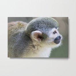 Squirrel Monkey - Animal Photography Metal Print