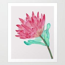 Watercolour King Protea Painting Art Print