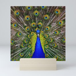 Peacock Mini Art Print