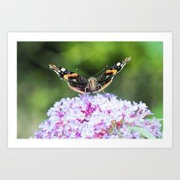 Butterfly IV Art Print