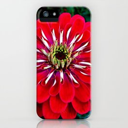 Zinnia Living in a Vibrant World iPhone Case