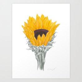 Sunflower 01 Botanical Flower Art Print