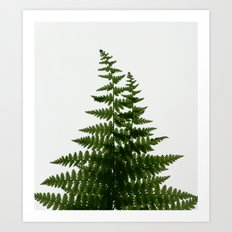 Ferns Art Print