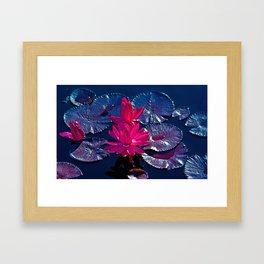 Pink Water Lillies Framed Art Print