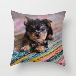 Scruffy Brown Puppy On Rainbow Rug Throw Pillow