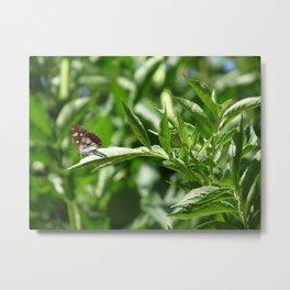 Dizzy Butterfly Metal Print