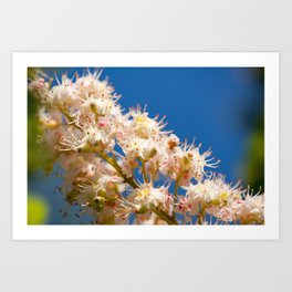 Macro of blooming Aesculus Art Print