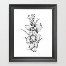 Gladiolus Framed Art Print