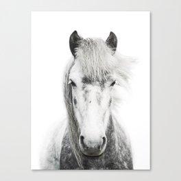Horse Portrait in Black & White Canvas Print