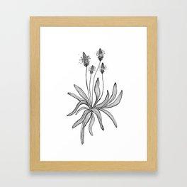 Plantain Framed Art Print