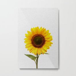 Sunflower Still Life Metal Print