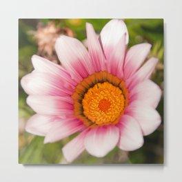 Southern African White ❁ Purple Gazania Flower Metal Print