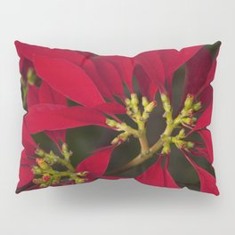 Poinsettia Red Euphorbia pulcherrima Pillow Sham