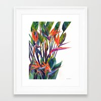 Framed Art Prints featuring The bird of paradise by takmaj