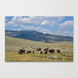 Roaming Bison Canvas Print