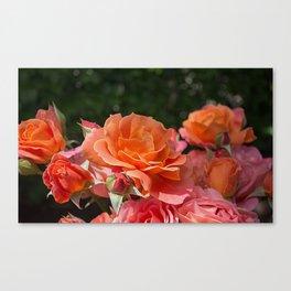 Roses Bokeh Background Canvas Print