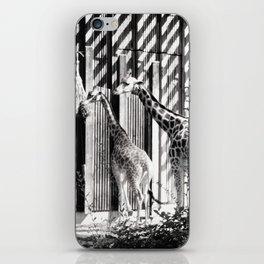 Three giraffes iPhone Skin