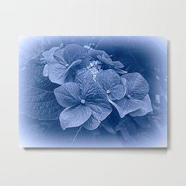 Hydrangea in Blue Metal Print