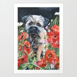 Border Terrier dog amongst the flowers Art Print