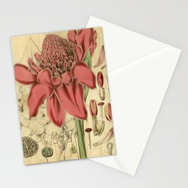 Flower 3192 alpinia magnifica Magnificent Alpinia1 Stationery Cards