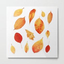 Autumn Hues Metal Print