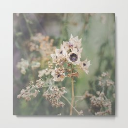 Delicate Autumn - wild flower photo, botanical print Metal Print