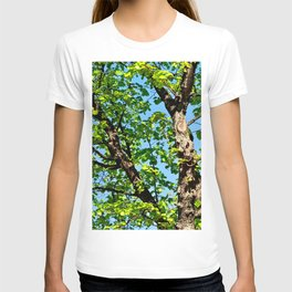 A Beautiful Linden Tree In Spring T-shirt