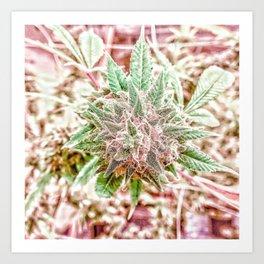 Flower Star Blooming Bud Indoor Hydro Grow Room Top Shelf Art Print