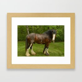 Clyde the Clydesdale Framed Art Print