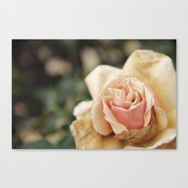 Delicate Rose Canvas Print