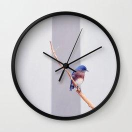 Western Bluebird Wall Clock