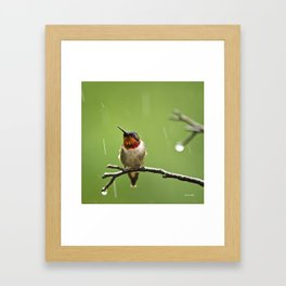 Hummingbird XIII Framed Art Print