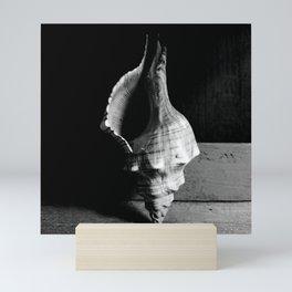Seashell Series No. 8 Mini Art Print