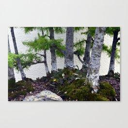 Shamrocks Canvas Print
