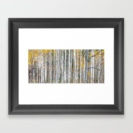 Aspensary forests Framed Art Print