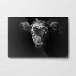 BW Moo Cow Metal Print
