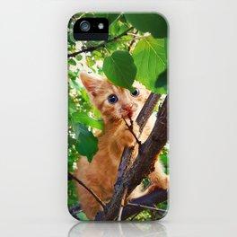 kitten in the tree iPhone Case