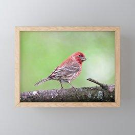 Fancy Finch Framed Mini Art Print