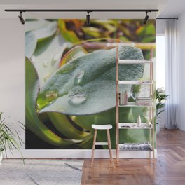 Watercolor Forb, Dimple Leaved Succulant 01, Dallvik, Iceland Wall Mural