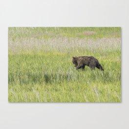 Young Brown Bear Cub, No. 1 Canvas Print