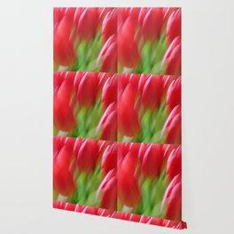 Tulip Dream Wallpaper