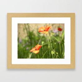 Little Wild Flowers  Framed Art Print