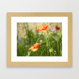 Little Wild Flowers  Framed Art Print