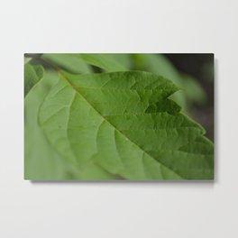 green sheet Metal Print