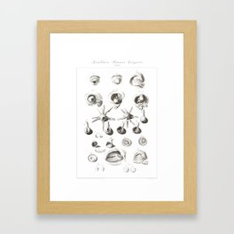 Human Anatomy Art Print EYE BALL IRIS Vintage Anatomy, doctor medical art, Antique Book Plate, Medic Framed Art Print