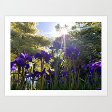 Iris Light Art Print