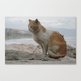 Stray Cat in Windy Weather Canvas Print