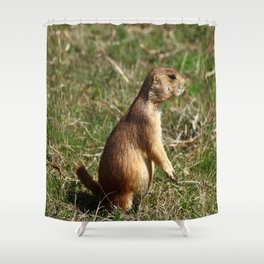 Black-tailed Prairie Dog Pose Shower Curtain
